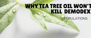Why Tea Tree oil not kill Demodex mites | Ungex