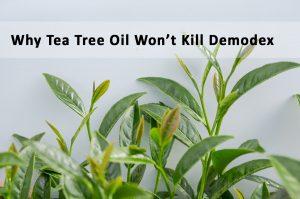 Why Tea Tree oil not kill Demodex mites | Ungex