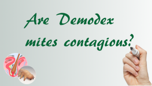 Demodex Cotagous | Ungex