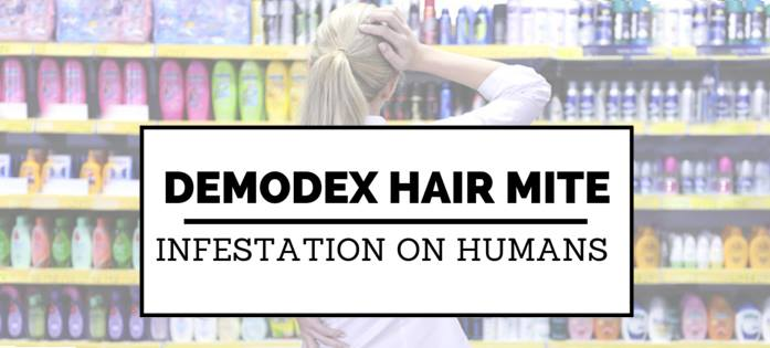 Demodex hair mite infestation on humans | Ungex