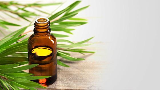 Tea Tree Oil | Ungex
