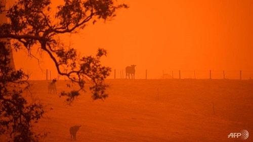 Australia Bushfire | Ungex