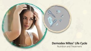 Demodex Mites' Life Cycle | Ungex