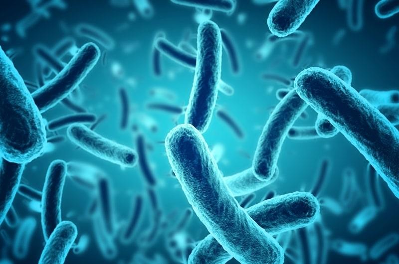 bacteria and demodex
