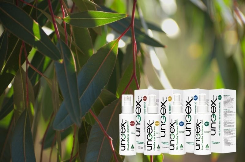Eucalyptus plant use, and health benefits | ungex