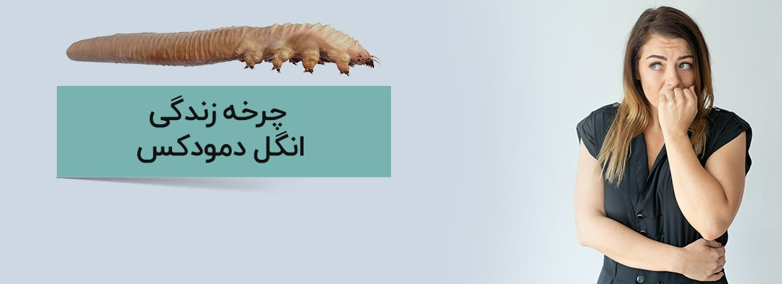 انگل های دمودکس | آنجکس