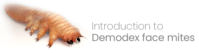 Introduction to Demodex face mites | Ungex