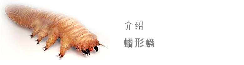 Demodex mites chinese | Ungex